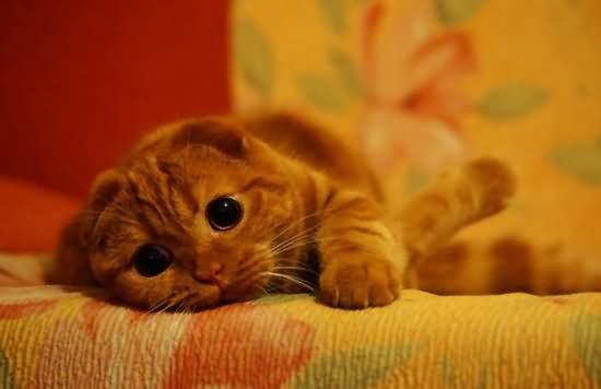猫咪过敏怎么办